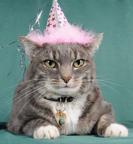 Datei:Birthcat.jpg