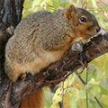 FFF Hörnchen am Stiel.jpg