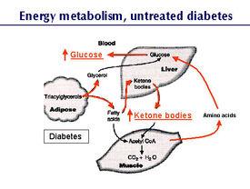 Hyperglycemia | Canine Diabetes Wiki | Fandom powered by Wikia