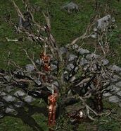Blood Raven cemetary tree