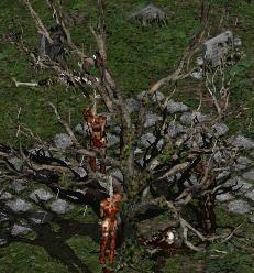 File:Blood Raven cemetary tree.JPG