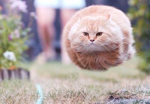 Rocket_Cat.jpg