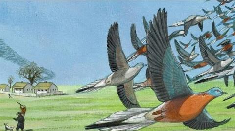 This Is Martha, the World's Last-Known Passenger Pigeon