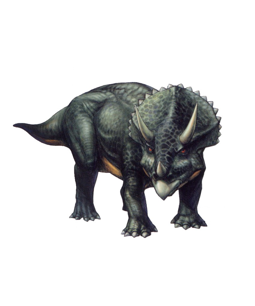 Dinosaurs Unearthed - Triceratops - YouTube |Triceratops Dinosaur