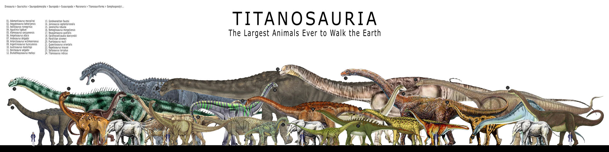 Titanosauria | Dinosau... Ampelosaurus Dinosaur King