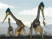 Quetzelcoatlsu feeding on ground