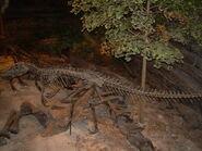 Ceratosaurus skeleton