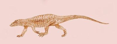Aetosaurus by Kahless28