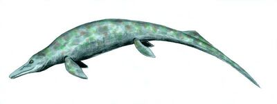 Cymbospondylus restoration