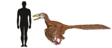 Deinonychus Size Comparison