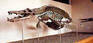 Pliosaurus ferox2