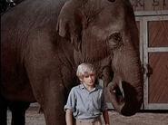 1970-elephant-05