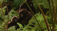 Mighty-joe-young-disneyscreencaps.com-78