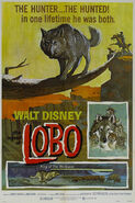 1962-lobo-1