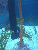 The Seas with Nemo & Friends 047 47