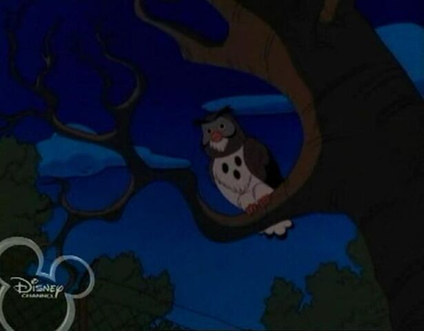 File:Owl in recess.JPG
