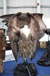 Maleficent concept 2