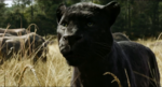 The Jungle Book 2016 (film) 22