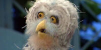 Doc Owl