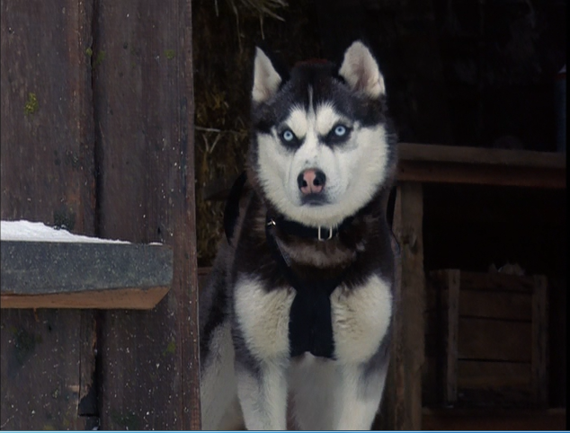 Snow Dogs | Disney Wiki | Fandom powered by Wikia