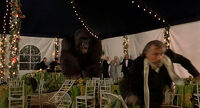 Mighty-joe-young-disneyscreencaps.com-8196