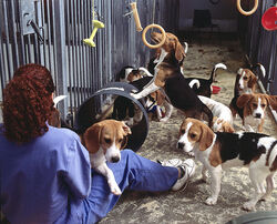 Beagle testing August 2000