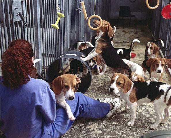 File:Beagle testing August 2000.jpg