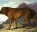 Alpine Mastiff