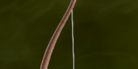 Ornate Longbow