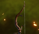 Grunsmann's Bow