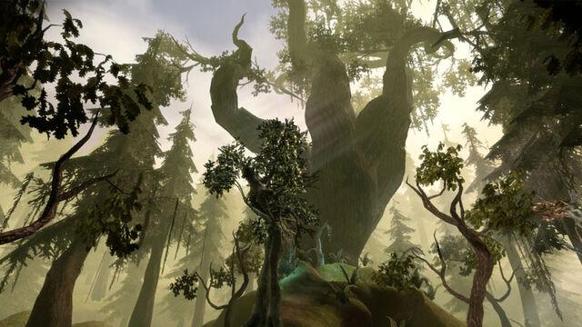 File:Area-Brecilian Forest.jpg