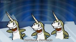 File:Narwhals.jpeg