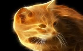 File:Firecat.jpg