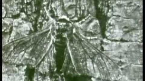 Evolution of the Peppered Moth-2