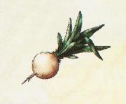 Dragon Quest 8 - Moonwort Bulb