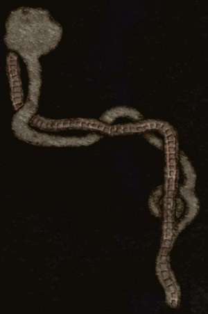 File:Tangaroa Abandoned Quarry Map.jpg