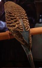Petey the bird