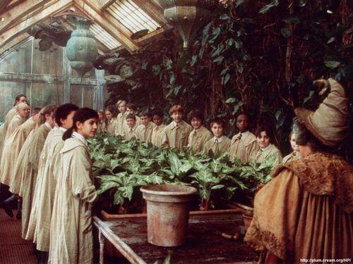 Herbology2