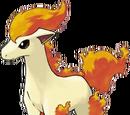 Ponyta (3.5e Monster)