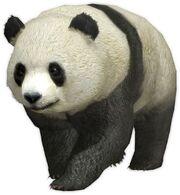 Panda (DW7)
