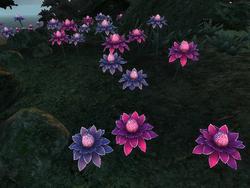 Mana Bloom