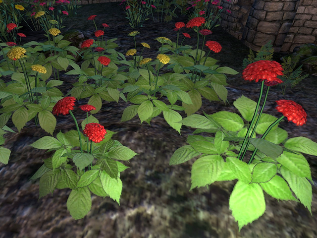 File:Ginseng Plant.png