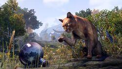 Abacean Cat
