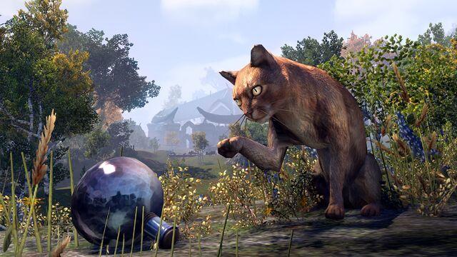 File:Abacean Cat.jpg