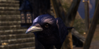 Strange Crow