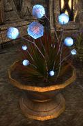 Gleamblossom Online