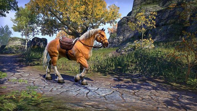 File:Palomino Horse ESO.jpg