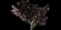 Gildergreen Sapling
