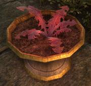 Crimson Nirnroot Online