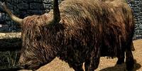 Cow (Skyrim)